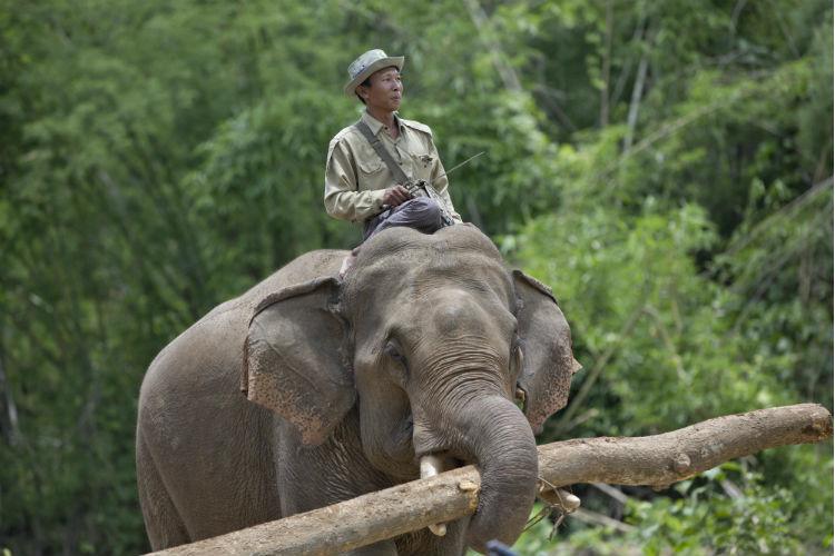 Elephant, India, Ganesha Chaturthi