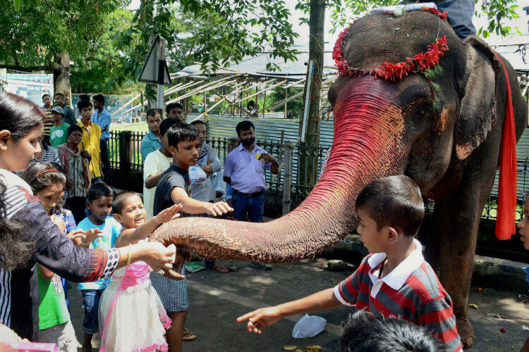 Elephant, India, Ganesha Chaturthi