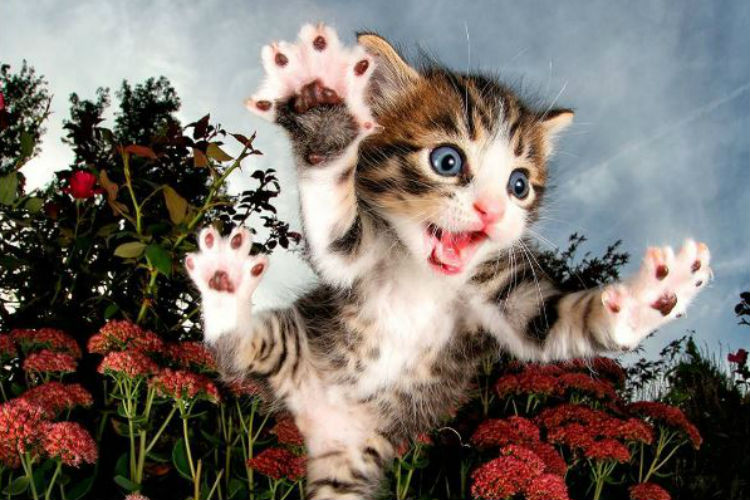 Cats can fly: These pictures of adorable rescue kittens ready to 'Pounce' will melt your heart