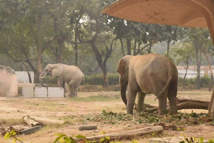 Delhi Zoo (Courtesy: Facebook/Madhuli)