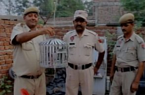 A pigeon with a threat letter written in Urdu found at Simbal post by BSF (Photo: ANI)
