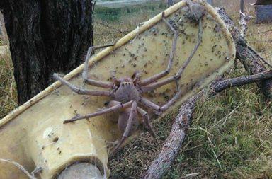 Charlotte, spider