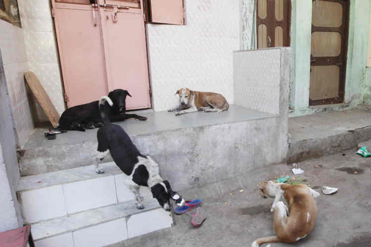Stop killing stray dogs or face action, Supreme Court tells vigilante groups inKerala