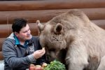 Bear as pet