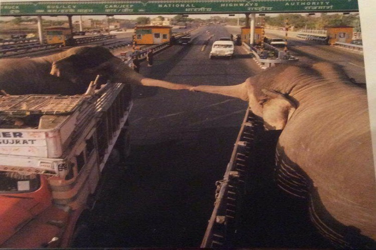 This photo of 2 elephants about to be separated is completely heartbreaking
