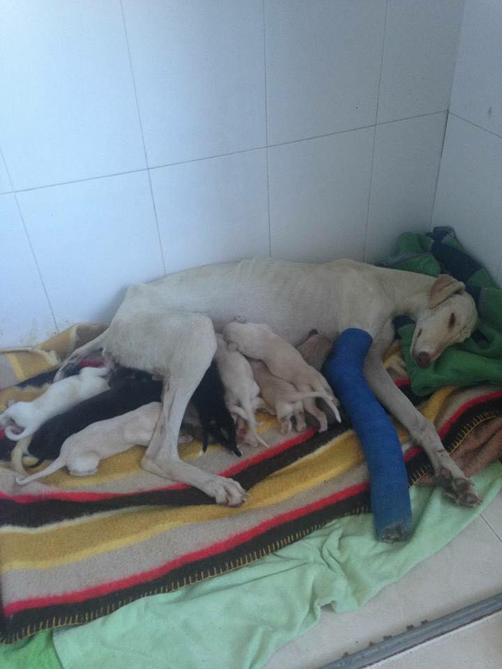 (Photo: Facebook/Clinivet Turre Clinica Veterinaria)