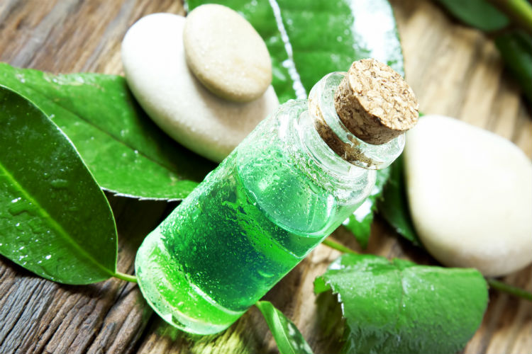 tea-tree-oil-dreamstime-image-for-inuth