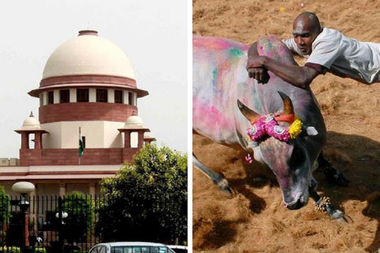 No Jallikattu this Year in Tamil Nadu
