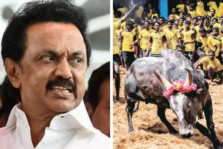 State, Centre Failed to Revoke Ban on Jallikattu: DMK's Stalin