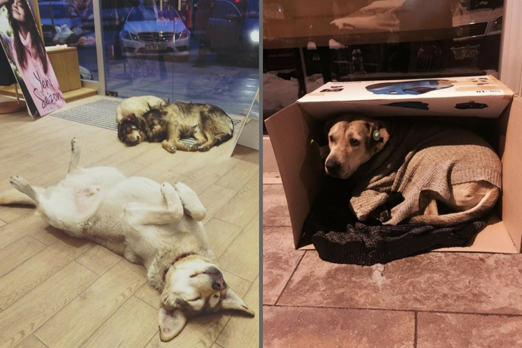 We should learn a thing or two from these people helping stray animals survive winters