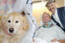 Heroic dog saves paralysed owner's life by keeping him warm in the snow