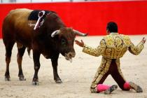 Ever struck you that bulls are sane enough to not attack unnecessarily? Let this video proveit.