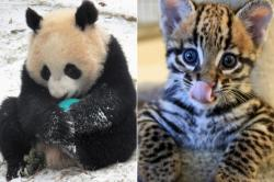 #CuteAnimalTweetOff trend celebrates the absolute awwwliciousness of baby zoo animals