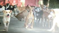 Hyderabad: Security guard booked for setting three stray dogs onfire
