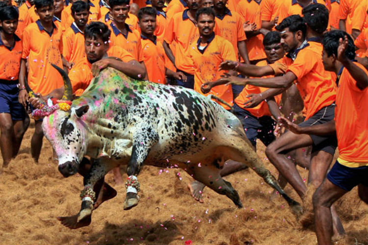 Jallikattu is about Tamil pride in line with anti-Hindi agitation; VHP, RSS backing doesn't make it a Hindu issue