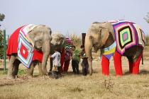 Photos: People in this village are knitting jumbo sweaters for rescued elephants to keep them warm