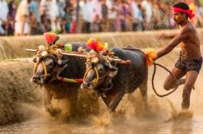 Will bring legislation for Kambala, says Karnataka CM