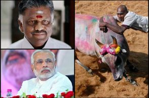 picture-jallikattu-for-inuth