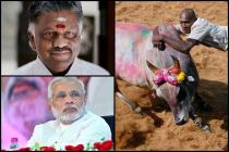 Jallikattu row: TN CM Panneerselvam to meet PM Modi today, will press for demand to bring back the sport
