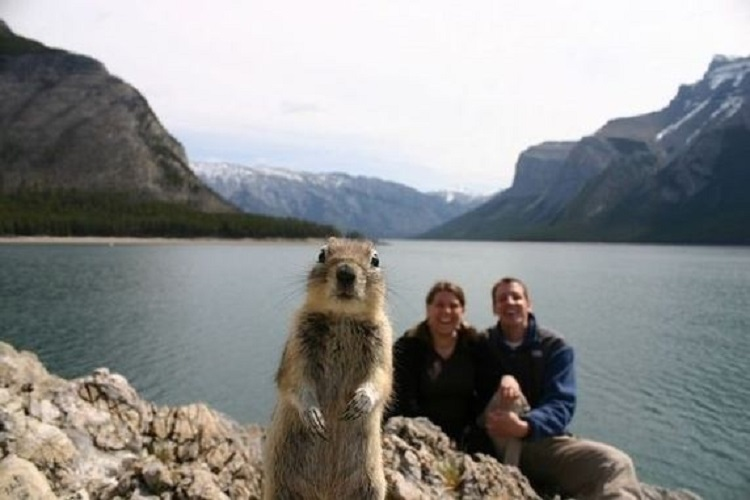 Photo bombing squirrel/Quora