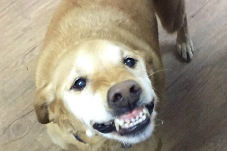 No one adopted this dog because of her 'weird' smile. We think her smile is ADORABLE!