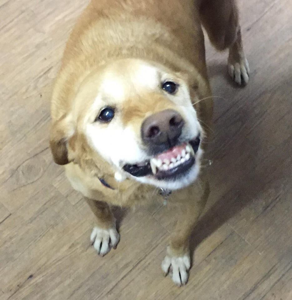 Smiley (Photo: Agape Fosters)