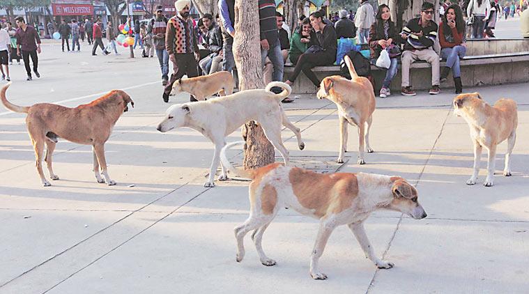 stray-dog-main