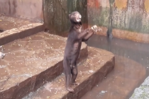 Footage of starved Sun bears in Indonesian zoo spark social media outrage