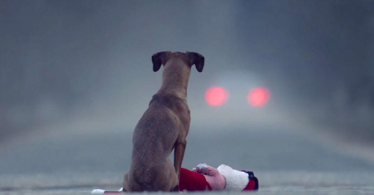 thegift-dog2