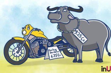 Yuvraj Buffalo