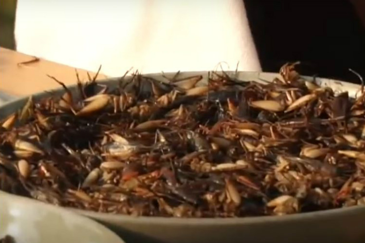 Angelina Jolie Eating Insects
