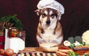 chef-dog