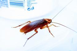 Doctors remove LIVE cockroach from woman's nose!