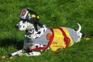 dalmatian-firefighter