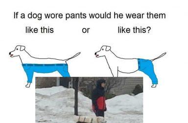 dogpant