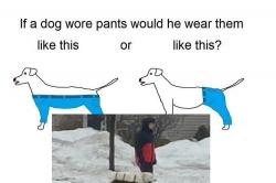 This picture of dog wearing pants has settled the internet's oldest debate