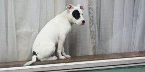 pet-theft-awareness-day