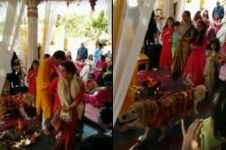 Watch: Three took the pheras at this lovely wedding and it's awwww-dorable!