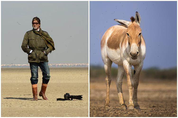 Uttar Pradesh Elections Know Why Amitabh Bachchan