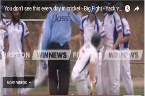 Cricket-fight