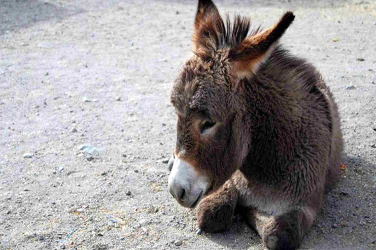 After Gujarat, here's why donkeys from Uttar Pradesh are in thenews