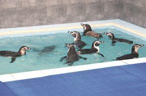 penguin-759