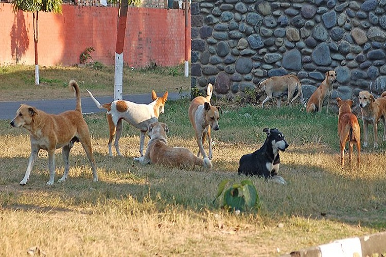 Delhi: Sangam Vihar stray dogs help police nab man who killed wife