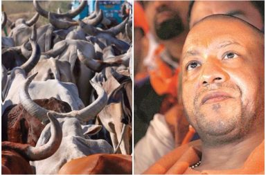 yogi-adityanath-cows