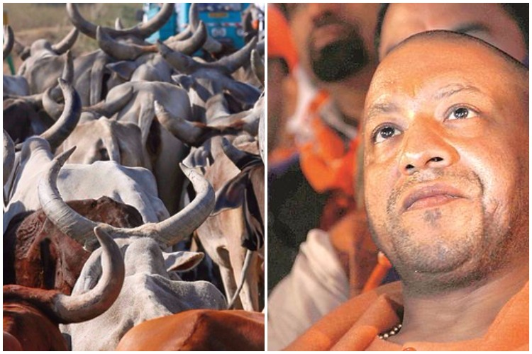 Wherever you go, I'll follow: Yogi Adityanath's cows to be shifted from Gorakhpur toLucknow