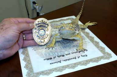 Arizona Iroh Lizard Bearded Dragon Police Cop