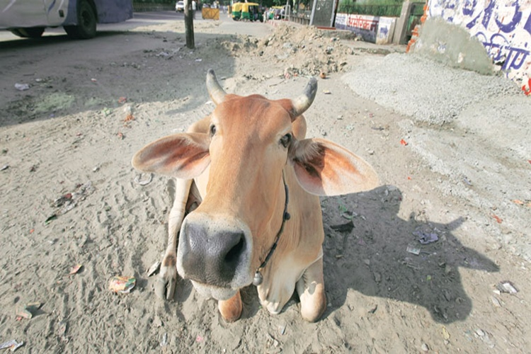 Police jeep tries to save cow, kills elderly woman