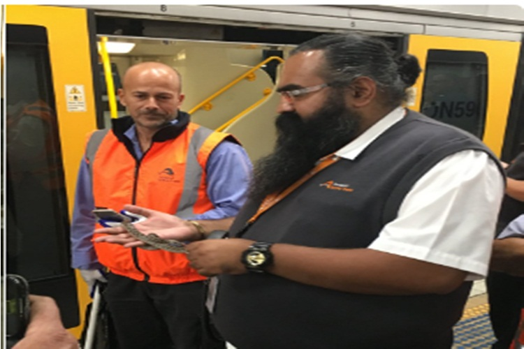 Watch: Passengers on train in Australia find python travelling withoutticket
