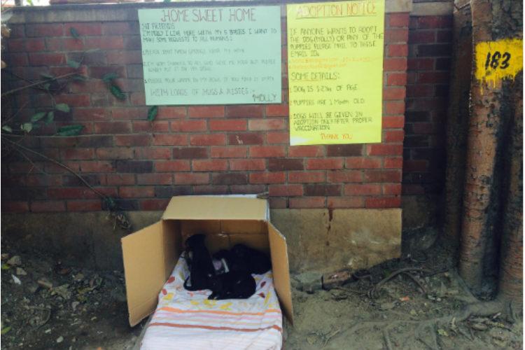 dog shelter north