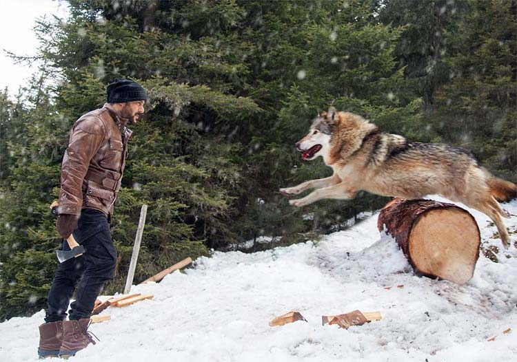 Salman Khan fighting with the wolf in Tiger Zinda Hai